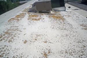 flat SPF foam roofs